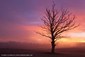 Baum im Morgennebel 4992