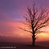 Baum im Morgennebel