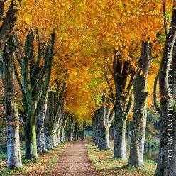 Allee im Herbst Frankreich