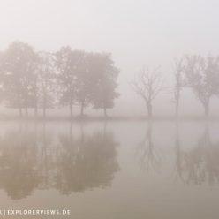 Bäume im Nebel 2063