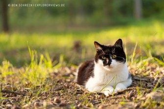 schwarz-weiße Katze in der Sonne