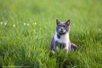 staunende Katze
