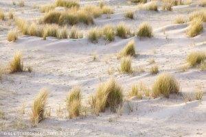 Dünenlandschaft Bretagne