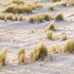 Dünenlandschaft Bretagne 6701