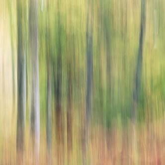 Baum Malerei ICM Fotografie