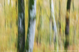 Herbstwald icm Forest Painting