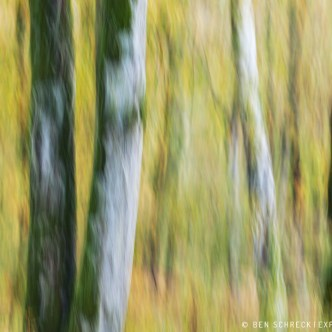 Herbstwald icm