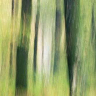 Wald Malerei 2