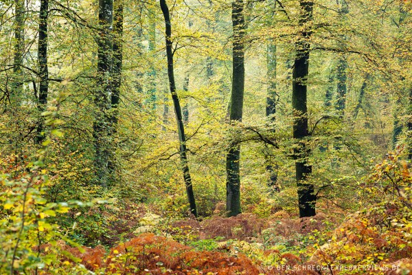 Blick in den Wald 8599-2