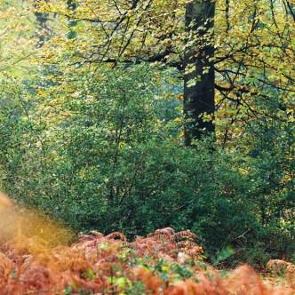 Farben im Wald Normandie