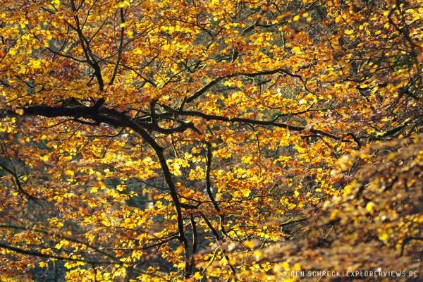 Herbstblätter im Wald 9724