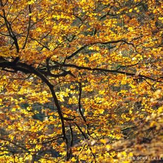 Herbstblätter im Wald