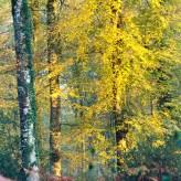 Sonnenaufgang im herbstlichen Wald