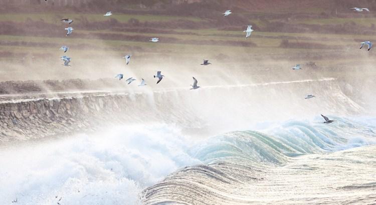 Möven Welle Normandie Sturm