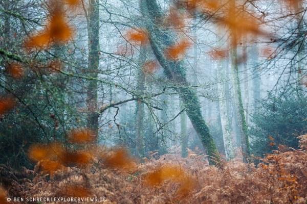 Herbstwald Frankreich 0099
