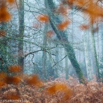 Herbstwald Frankreich