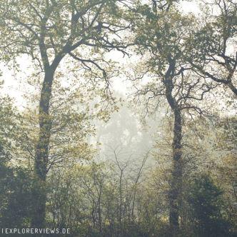 Bäume im Frühling 8327