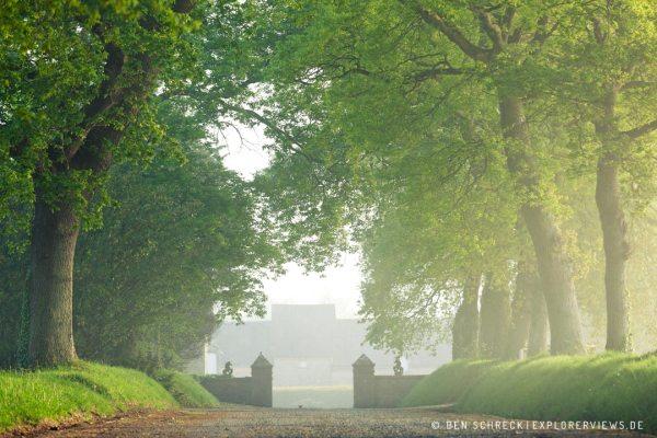 Eichenallee im Nebel