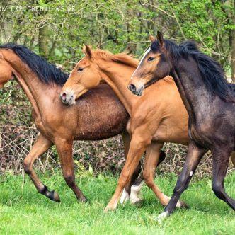Junge Pferde auf der Weide