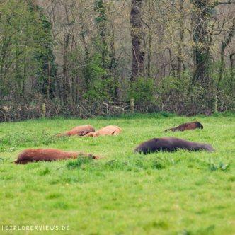 Schlafende Pferde