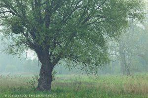 Landschaftsfotografie Weide im Morgengrauen 8435