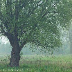 Weide im Morgengrauen 8435