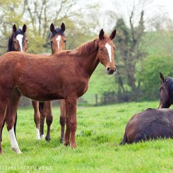 Young Horses calm