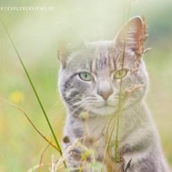 Katzen Portrait Sommer 3799