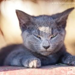 Graue Katze Zen 7215