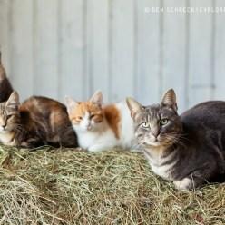 Katzen im Heu 8803