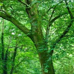 Magische Bäume Baum im Wald 5513