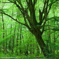 Baum Silhouette 5605