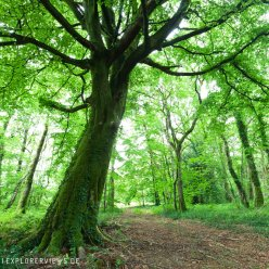 Normandie Wald 5462