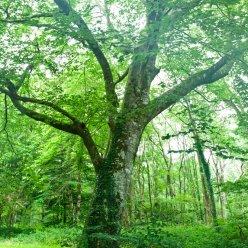 Normandie Wald 5472