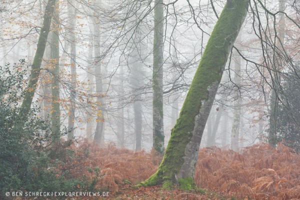 Baum im nebligen Wald 0207