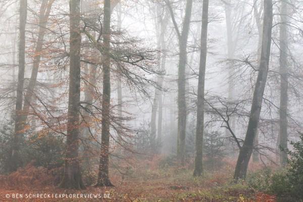 Nebel im Wald 0196