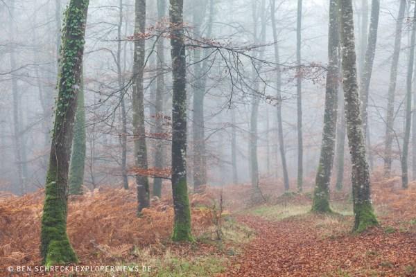Waldweg im Nebel 0257