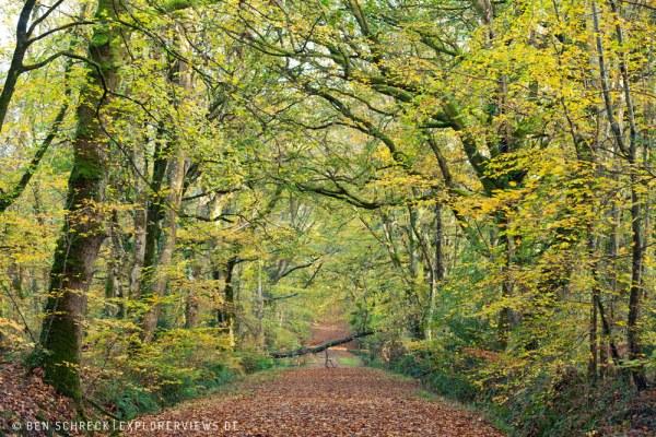 Waldweg im Herbst 9263