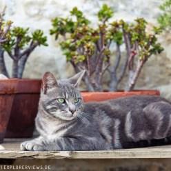 Katze zwischen Blumentöpfen 3526