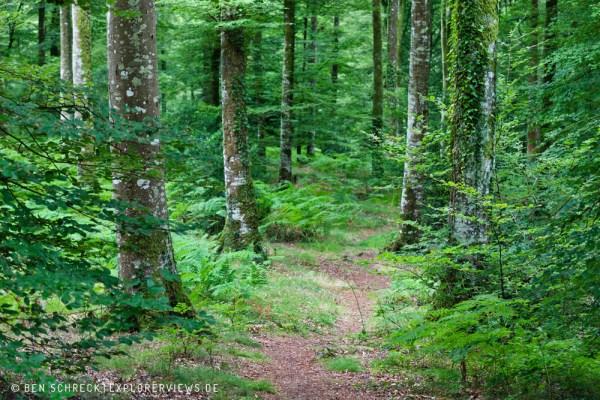 Sommerwald Normandie