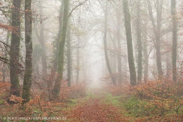 Weg durch Nebelwald 0138