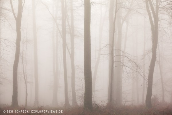 Mystischer Wald 3321