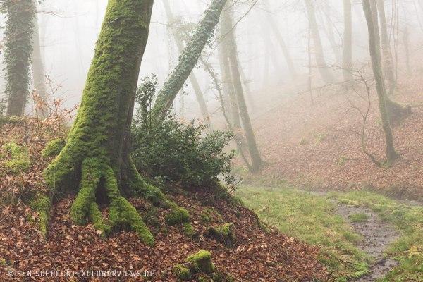 Nebel im Wald Normandie 3310