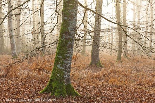Nebelwald Frankreich 3296