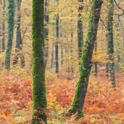 Herbstwald Normandie 9327