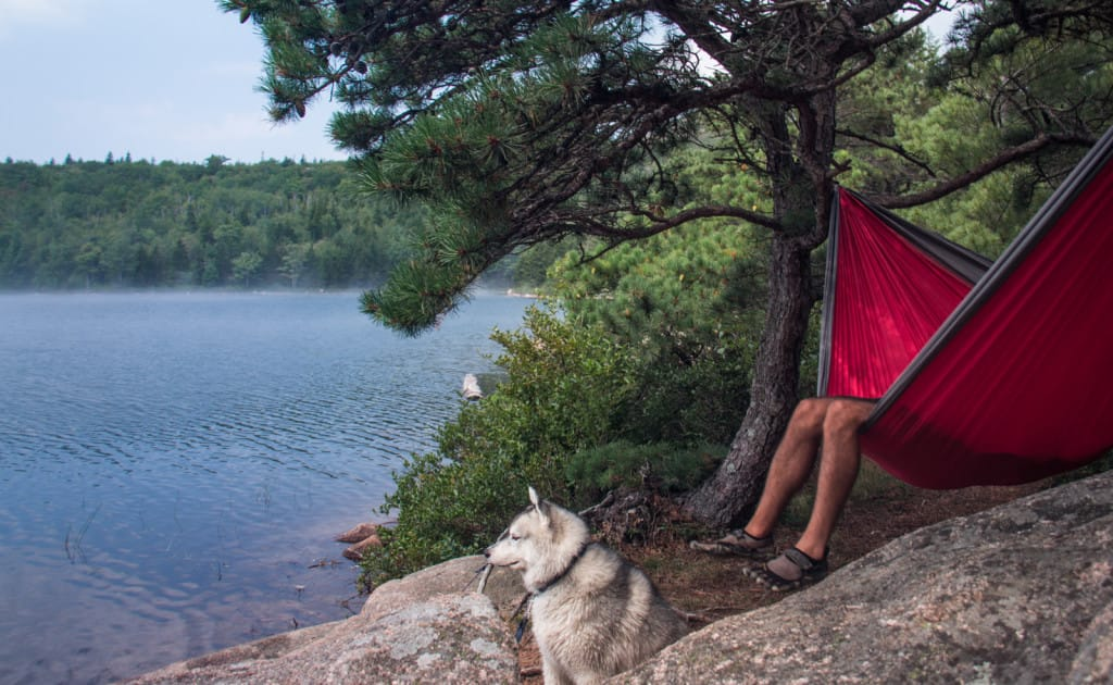hammocking with dog at acadia