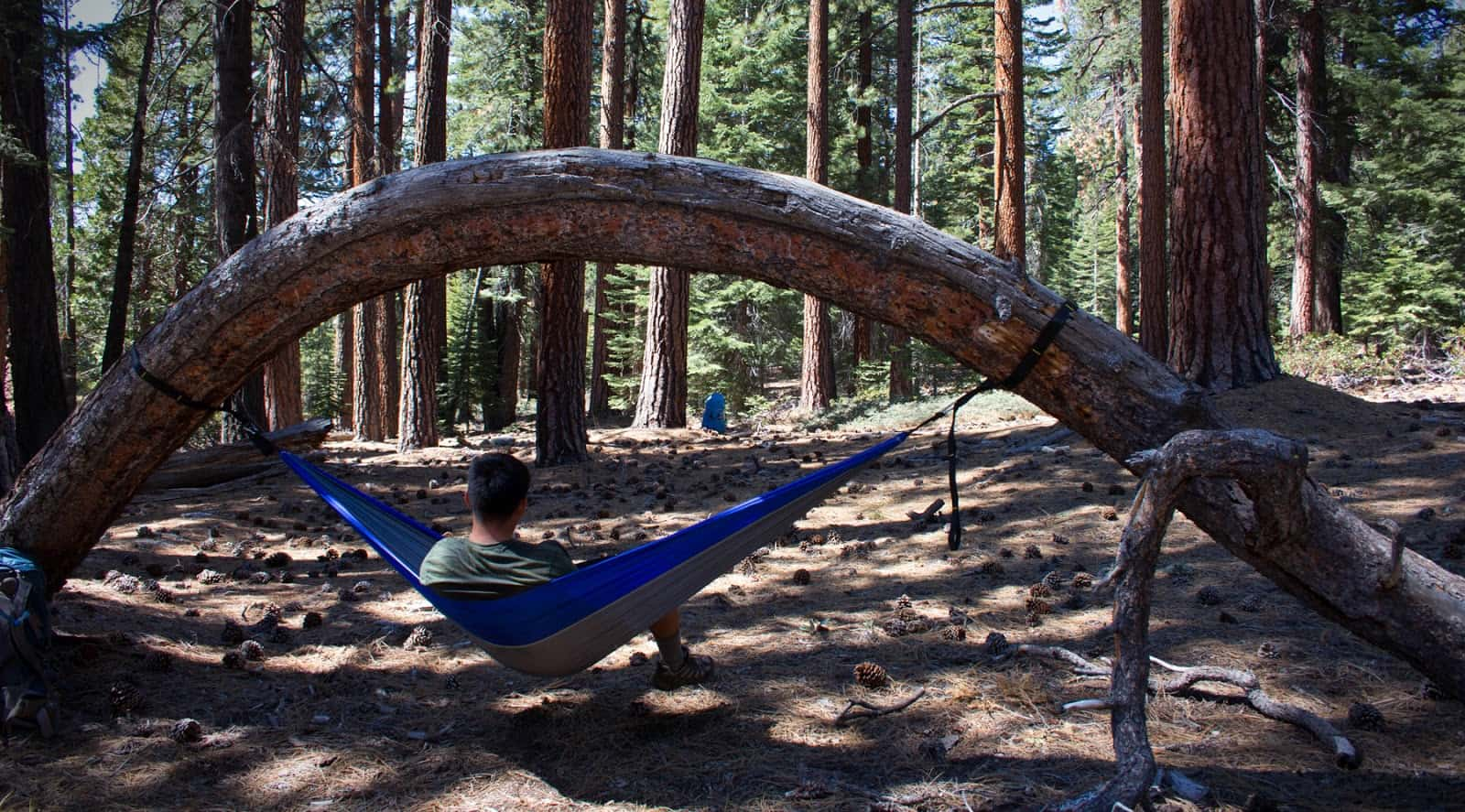 Jeff's camping hammock hanging from an arched tree trunk