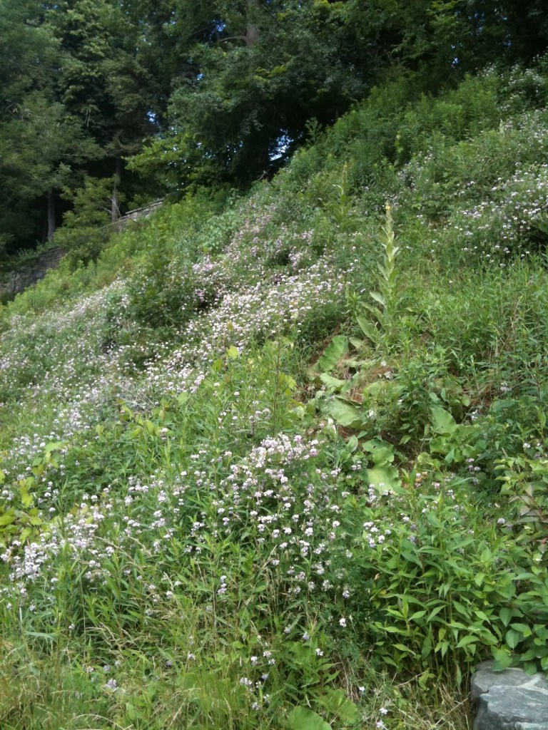 shows a field of wildflowers on the side of a mountain