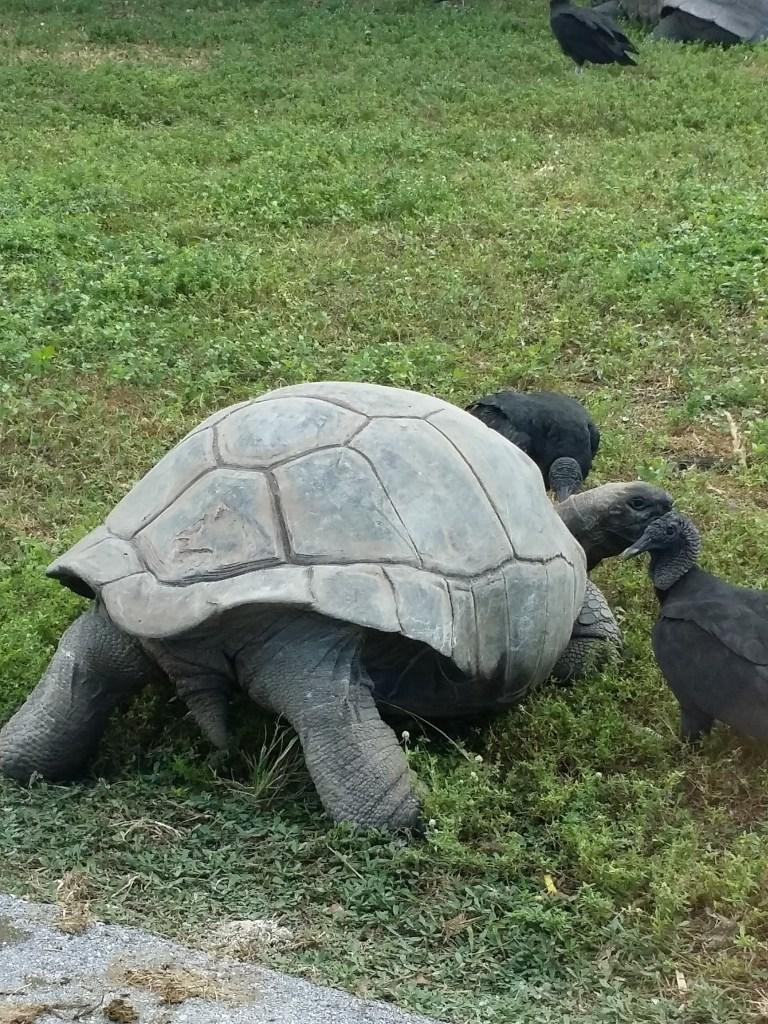 turtle at Lion Country Safari