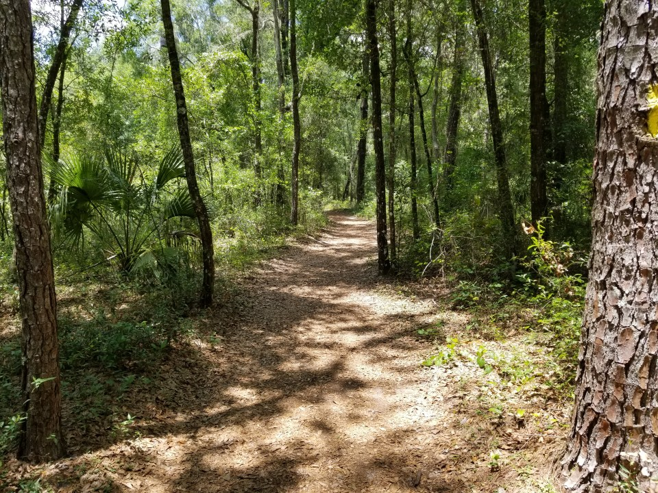 hiking trail through wooded hammock at Rainbow Springs State Park